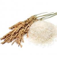 Рис  大米